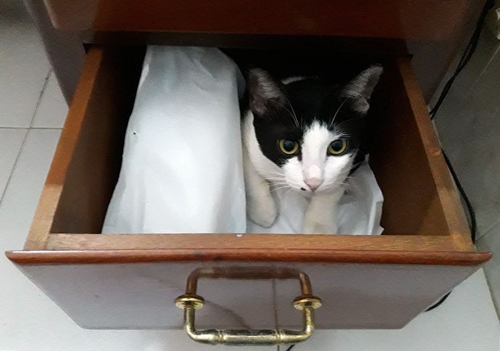 Mimi the cat in a drawer